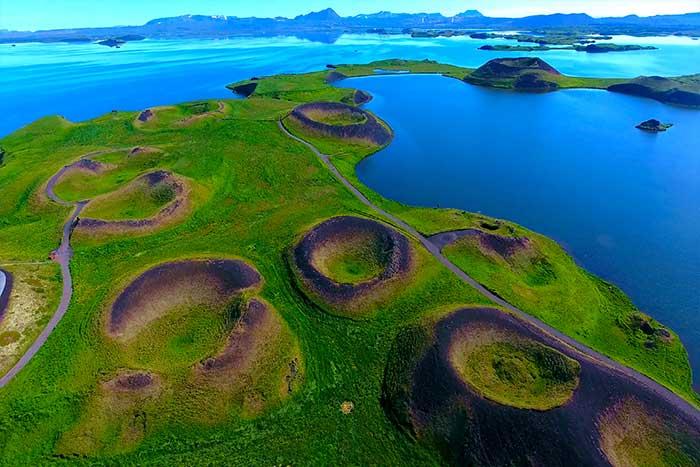 Wildflowers - Northern Iceland Walking & Hiking Tour