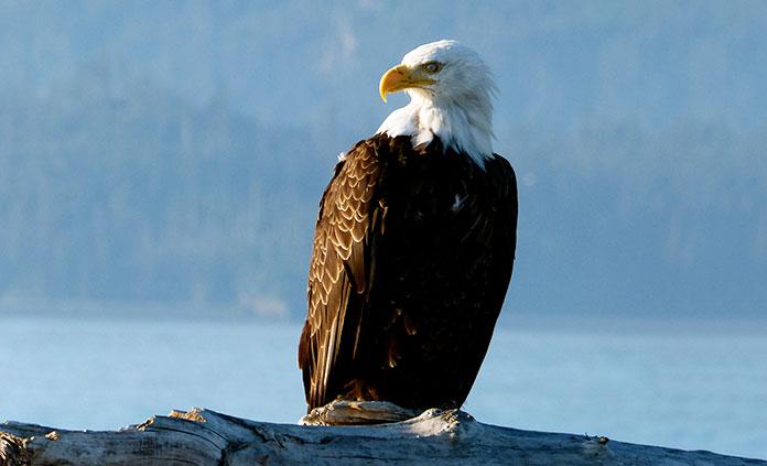 Alaska: Prince William Sound to Denali Multisport Tour