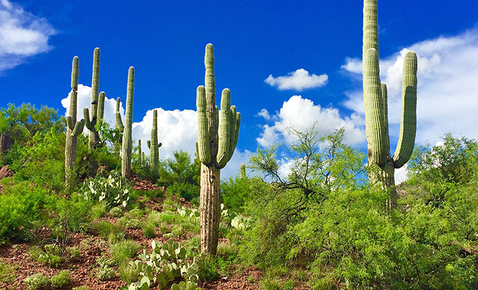 Tucson and Sonoran Desert Arizona Bike Tour