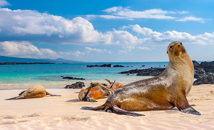 Galápagos by Land & Sea Multi-Adventure Tour