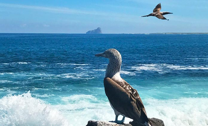 Galapagos Ocean Cruise Multi-Adventure Tour