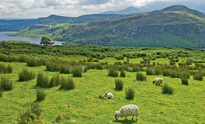 Ireland Walking and Hiking Tour