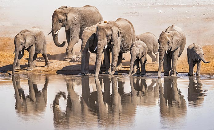 Namibia & Zimbabwe Active Safari Walking Tour