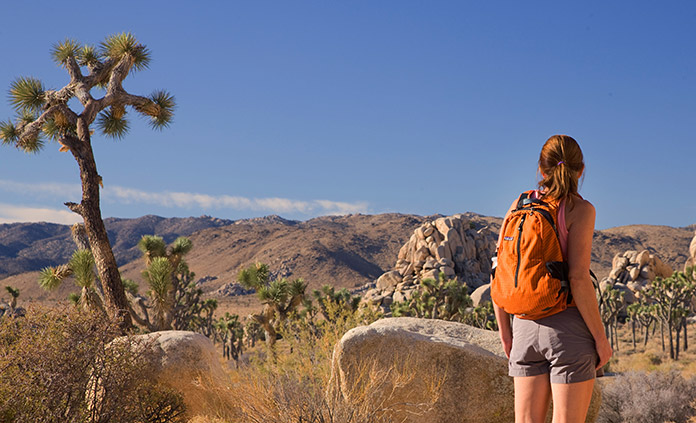 Palm Springs and Joshua Tree Walking and Hiking Tour