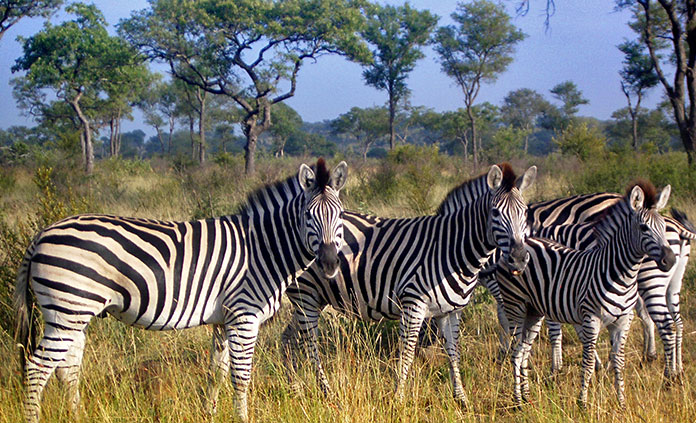 South Africa & Botswana Active Safari