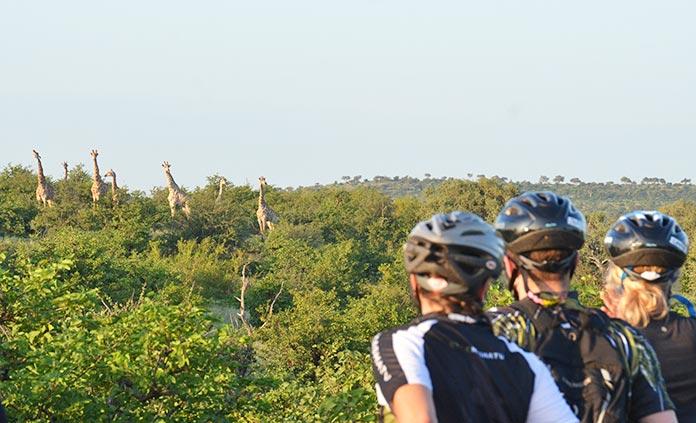 South Africa and Botswana Safari Multi-Adventure Tour
