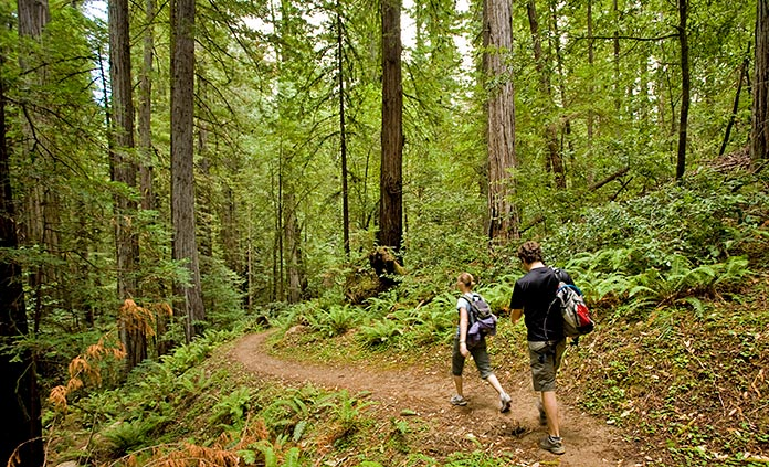 Redwoods Multi-Adventure Camping Tour