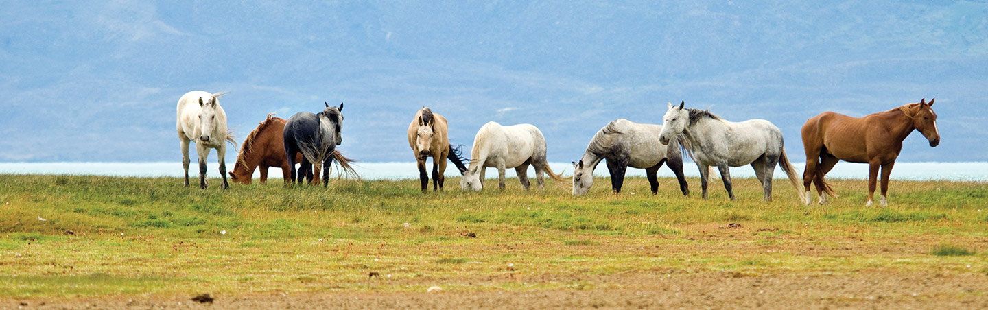 Horses - Argentina's Lake District Multisport Adventure Tour