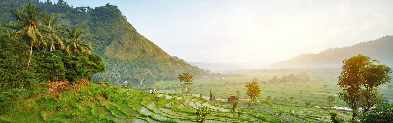 Rice Terraces - Backroads Bali Family Bike Tours