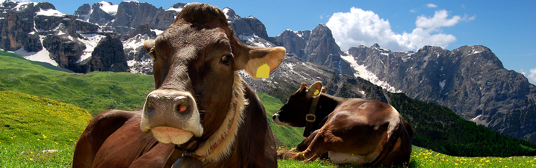 Animals in the Dolomites, Italy Alps
