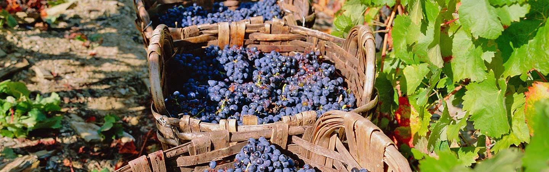 Grapes - Douro River Cruise Walking and Hiking Tour