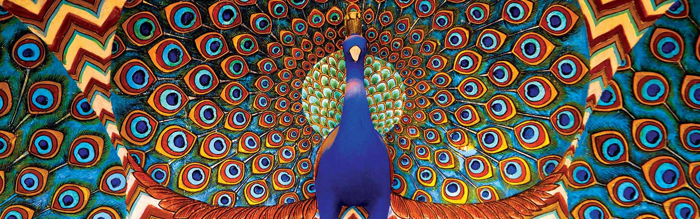 Peacock on Backroads India Multisport Tour