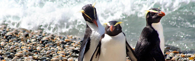 Penguins - Backroads New Zealand Bike Tour