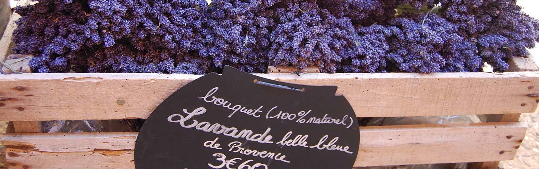 Lavender on Backroads Provence Bike Tour