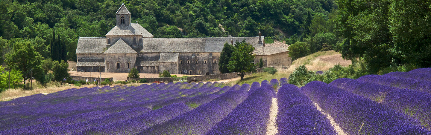 Lavender Field, France Provence Bicycle Tours