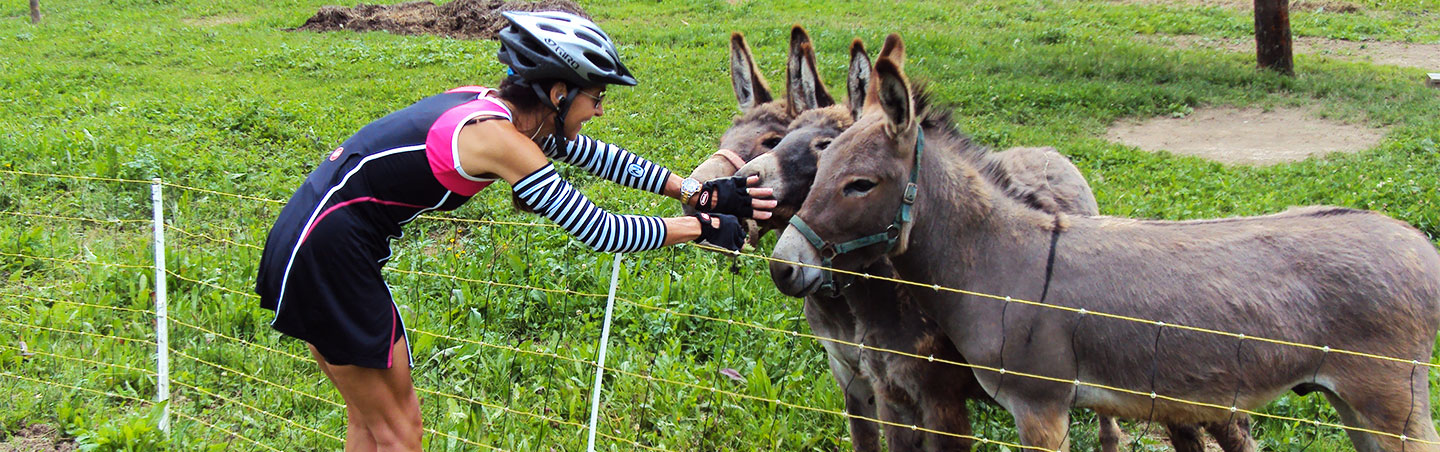 Donkey - Backroads Slovenia & Italy Bike Tour