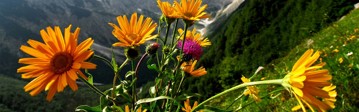 Wildflowers - Backroads Slovenia & Italy Bike Tours