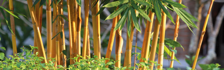 Bamboo, Thailand
