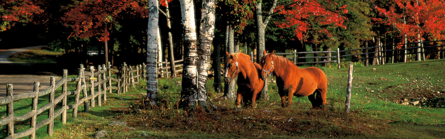Horses in Fall, Vermont