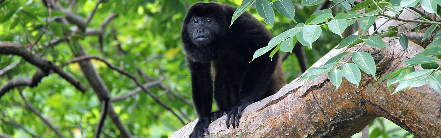 Monkey - Backroads Belize & Guatemala Family Breakaway Multisport Tour