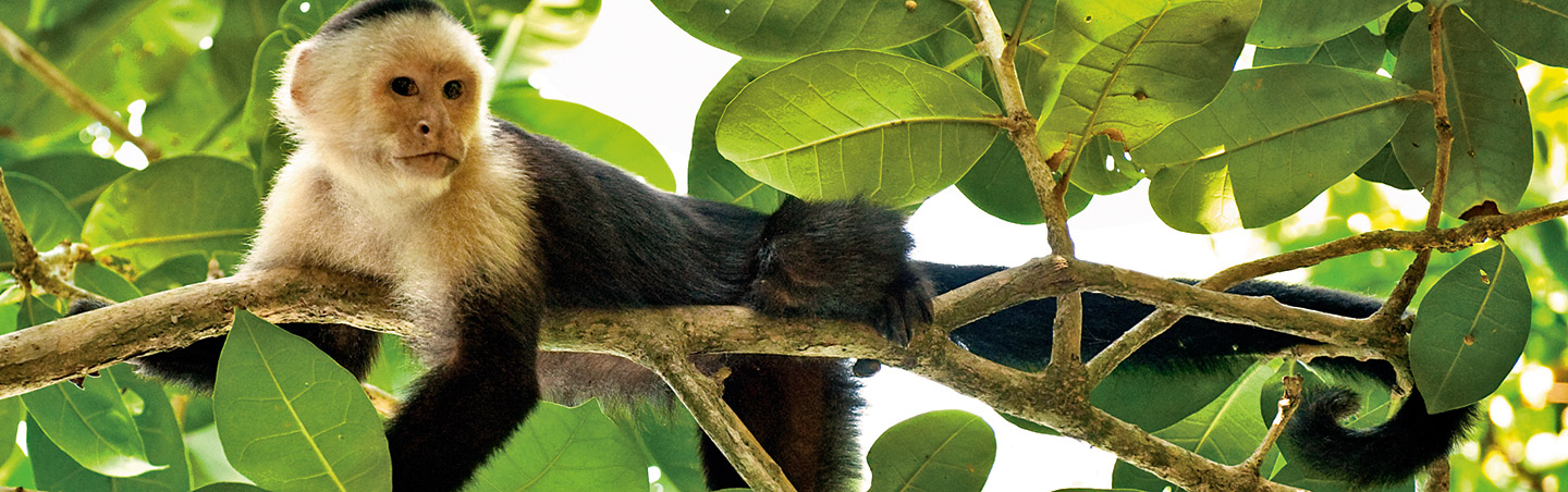 Monkey on Costa Rica Family Breakaway Multisport Adventure Tour