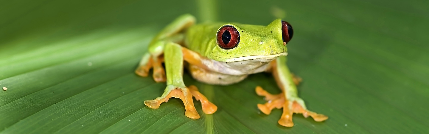 Frog - Costa Rica Family Multisport Adventure Tour