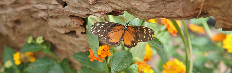 Butterfly - Backroads Costa Rica Multisport Adventure Tour