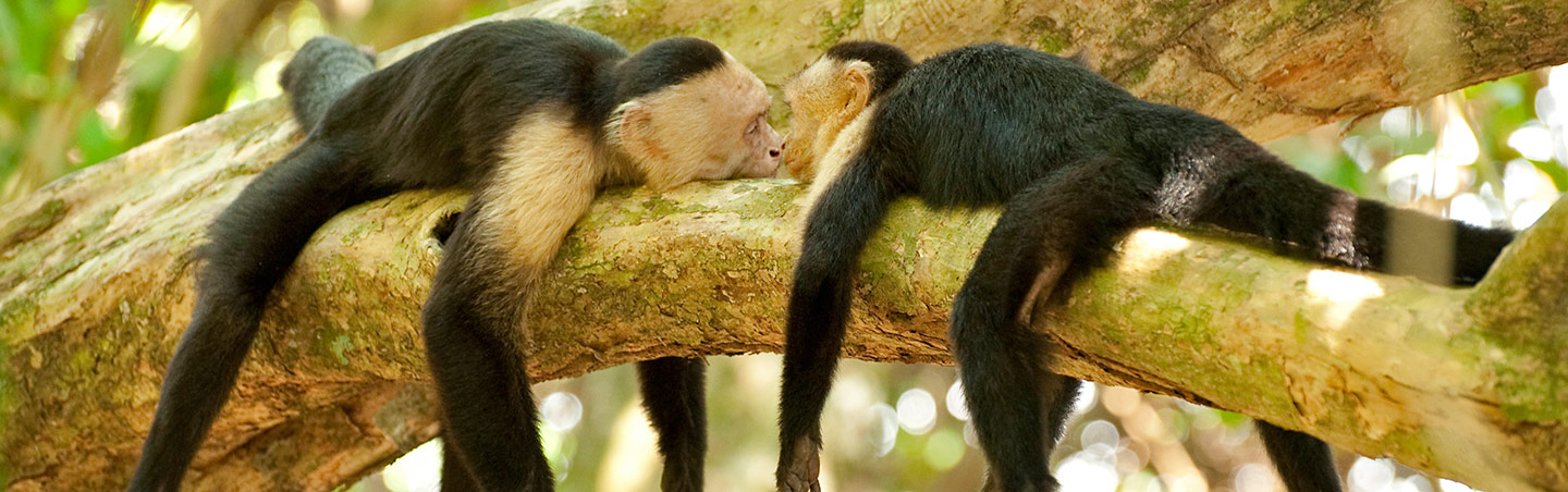 Monkeys - Costa Rica Family Multisport Adventure Tour