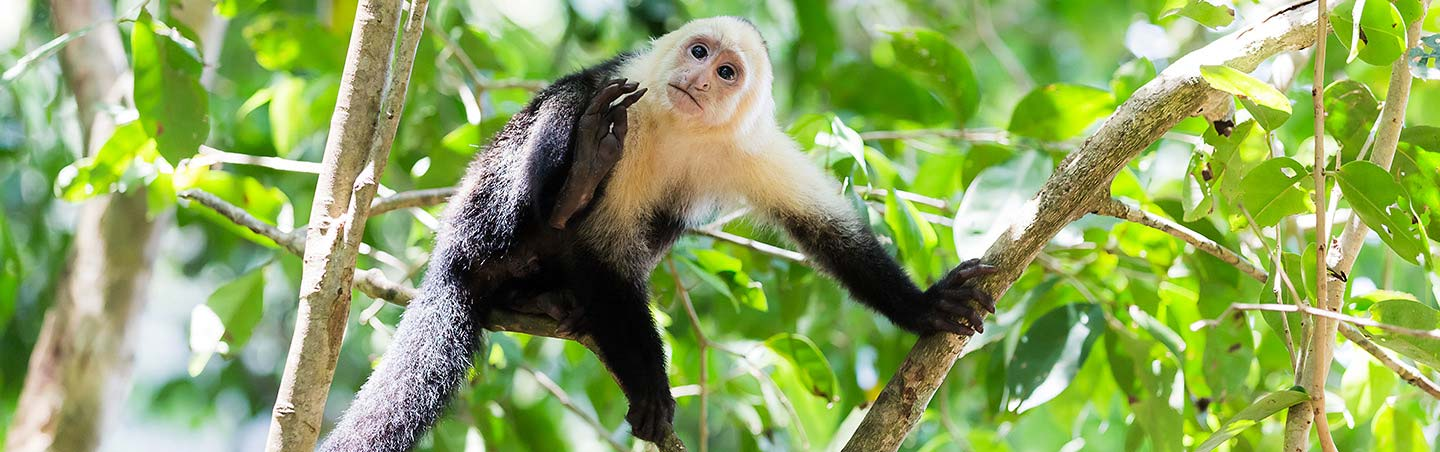 Wildlife - Costa Rica Family Multisport Adventure Tour