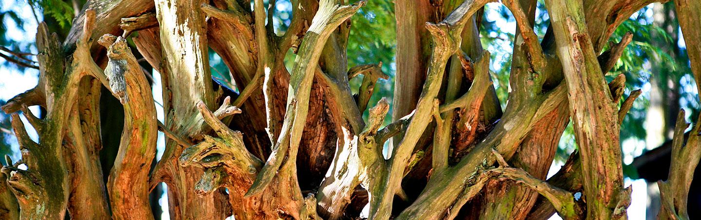 Driftwood - San Juan Islands Family Multisport Tour