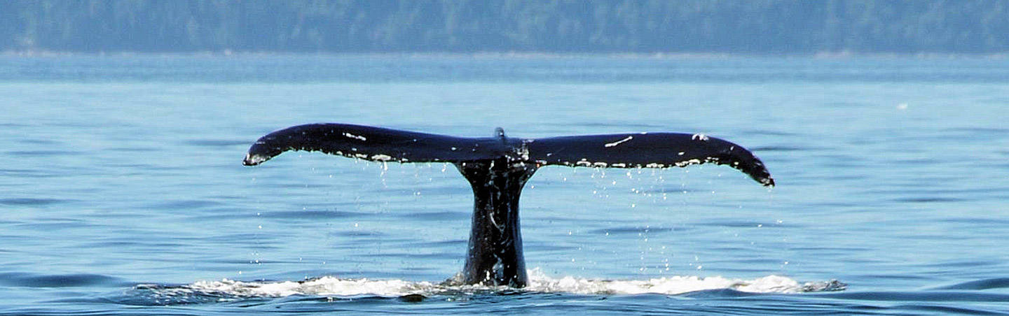 Whale Watching on Backroads Quebec Family Breakaway Adventure Tour