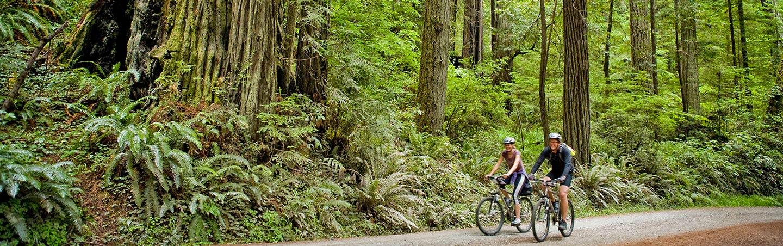 Redwoods Family Bike Tour