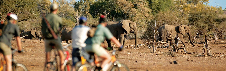 Elephants - Backroads South-Africa & Botswana Bike Tours