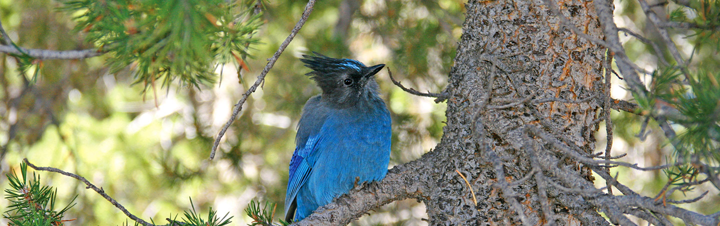 Blue Jay - Backroads Yosemite Family Breakaway Multisport Adventure Tour