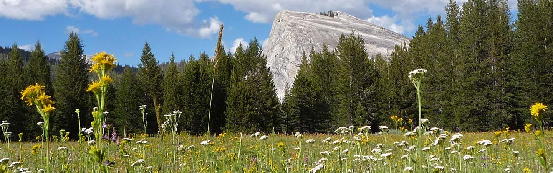 Lembert Dome at Tuolumne Meadows, Yosemite National Park, California