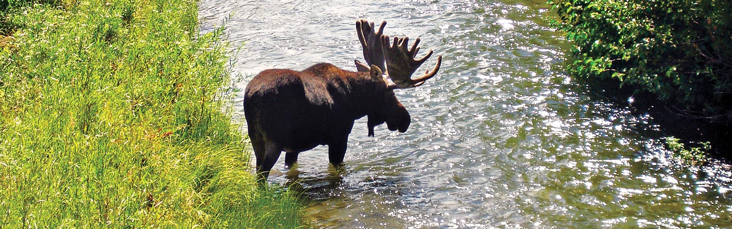 Moose, Yellowstone & Teton family adventure trips