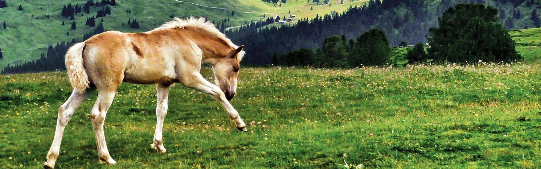 Horse - Backroads Dolomites Hut-to-Hut Hiking Tour