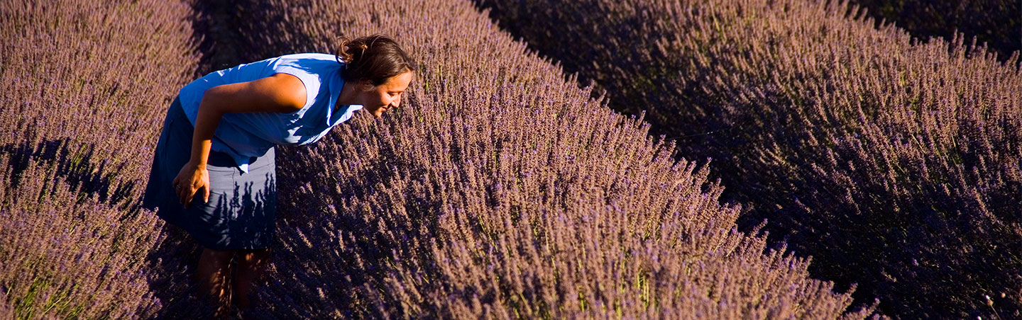 Walking in Lavender fields - Provence & Costa Brava Walking Tours