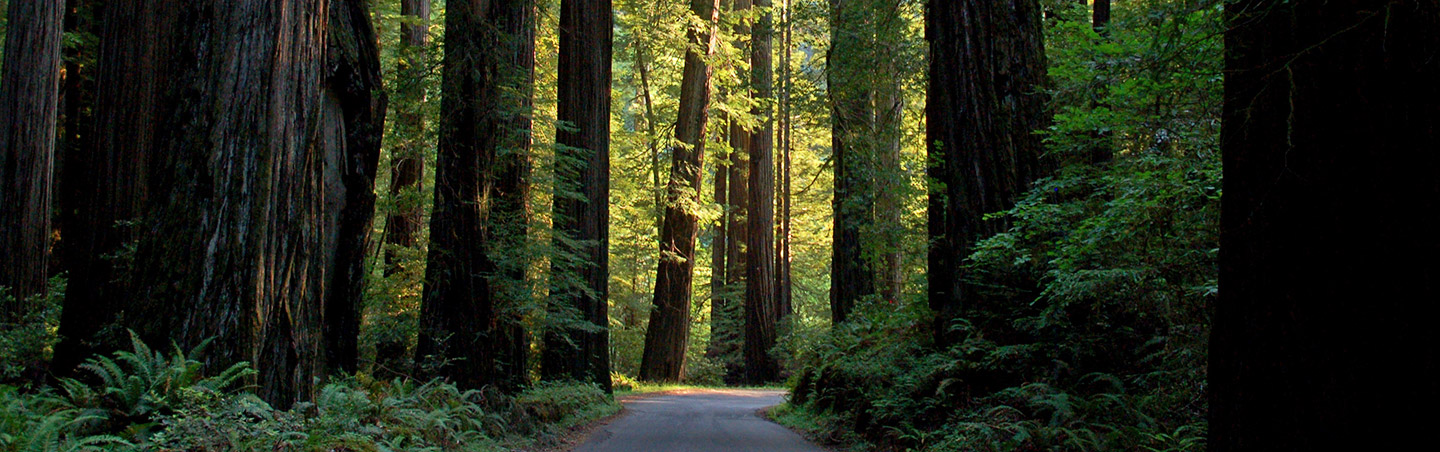 Armstrong Redwoods, Backroads Wine Country Active Culinary Walking Tours