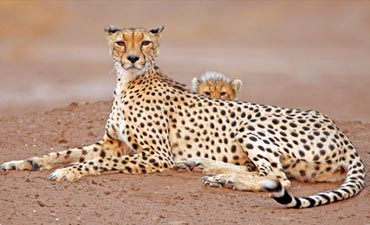 South Africa & Botswana Family Safari Multi-Adventure Tour – Teens & Kids