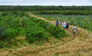 Cuba walking and hiking tour