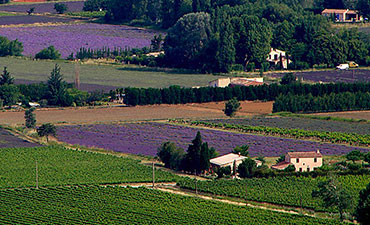 Provence Walking Vacations