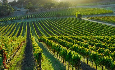 Wine Country walking and cooking tour
