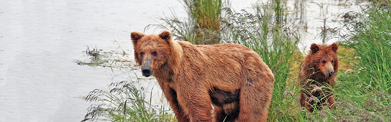 Bears on Backroads Alaska Bike Tours