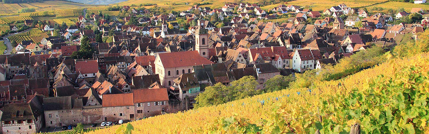 Alsatian Vineyard - Backroads Champagne & Alsace France Bike Tours