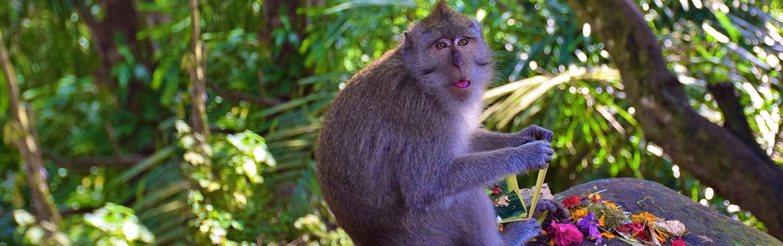 Monkey - Backroads Bali Family Bike Tours