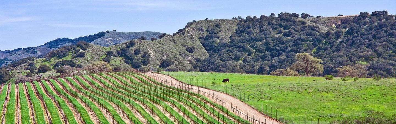 Vineyard - California Coast Bike Tours