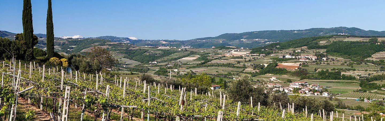 Vineyards on our Parma to Verona Italy Bike Tour