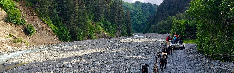 Dog mushing - Backroads Alaska Family Multisport Tours