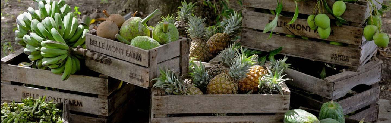 Pineapples, Backroads Caribbean Family Multisport Tour